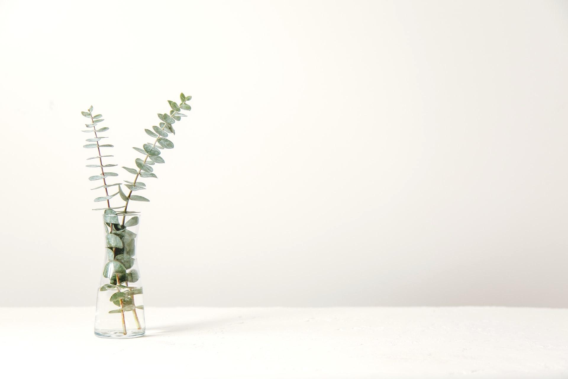 小顔サロンなじらね・ヘッダー画像/花器に生けられたオリーブの枝